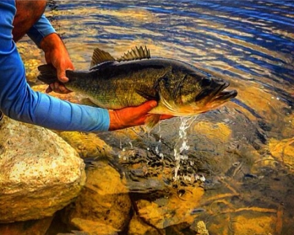 how to fish for big bass